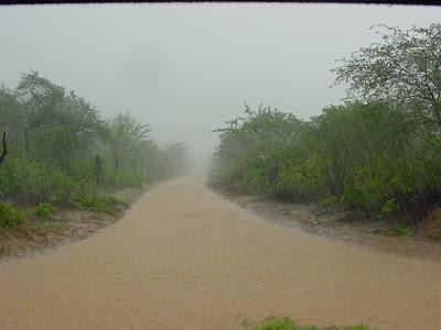 Chuva na caatinga